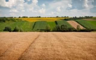 Как оформить пай земли в собственность