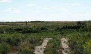 Типовой договор аренды земельного участка сельхозназначения
