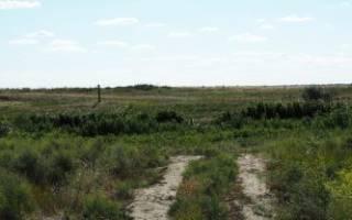 Договор аренды земельного пая сельхозназначения образец