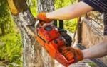 Незаконная вырубка деревьев в городе ответственность